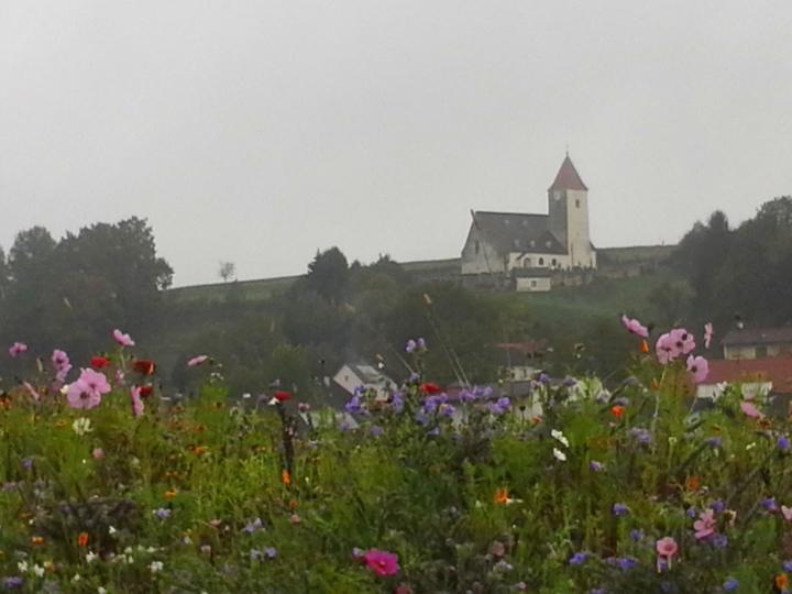 Gemeindewandertag-10102015-4